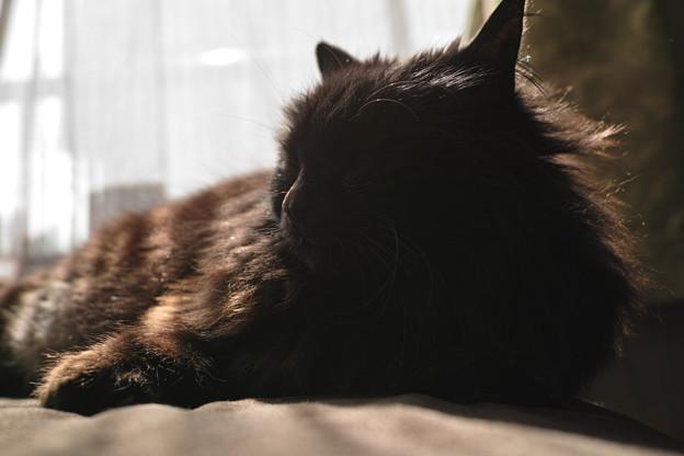 黒潰れ逆光猫