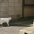 写真: 谷中の猫2@20150501