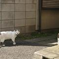 Photos: 谷中の猫2@20150501