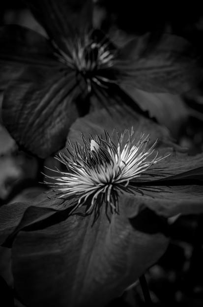 もふもふ花