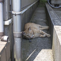 Photos: 家猫より、外猫と仲が良いというのも、、、。