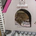 写真: Cat House