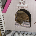 Photos: Cat House