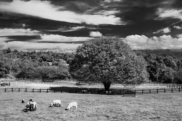 Photos: この木何の木、羊の木