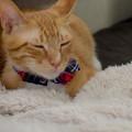 Photos: 微睡み猫