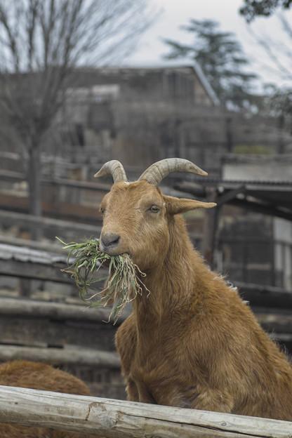 Photos: 野菜から食えって言われた、、