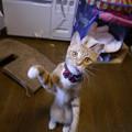 写真: にやける招き猫