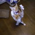 Photos: 幸せなら手を叩こう!1
