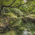 写真: 緑色の小川