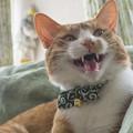Photos: 良く鳴く猫だ
