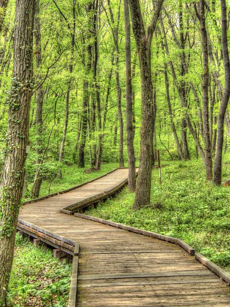 森の妖精に遇いに行ってくる