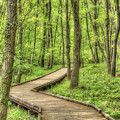 写真: 森の妖精に遇いに行ってくる