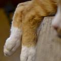 脚を組む猫(爆)