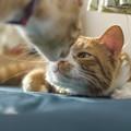 威嚇しないで仔猫自ら大猫に挨拶をした