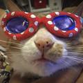 Photos: Sunglasses González(サングラス・ゴンザレス)改名か(爆)