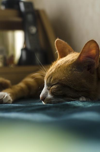 微睡み、、