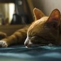 Photos: 微睡み、、