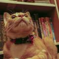 Photos: LowAngleだと知らない猫に見える