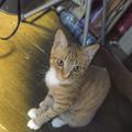 Photos: じ~~~@Rickie