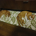 写真: 猫真似1