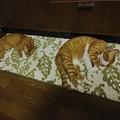 Photos: 猫真似1