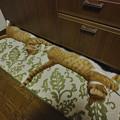 写真: 猫真似2