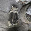 尾道の招き猫博物館の玄関にて