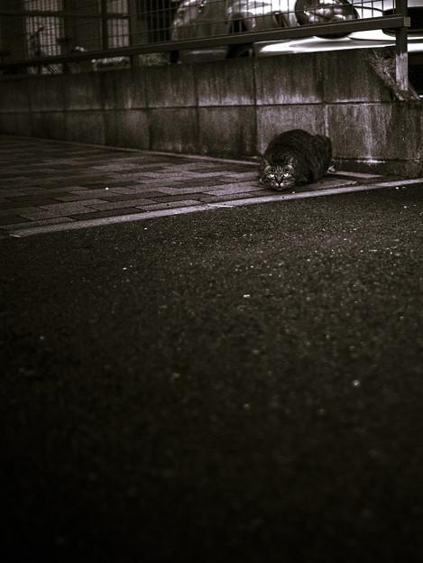 Photos: 眼光