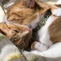 写真: 抱きついてぺろぺろ