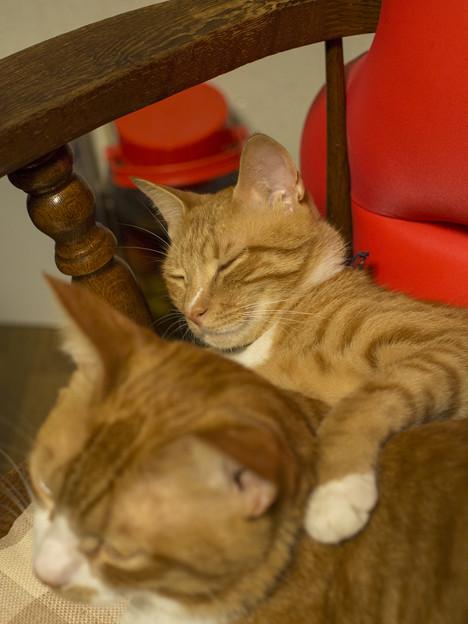 Photos: 好きだから肩を組む