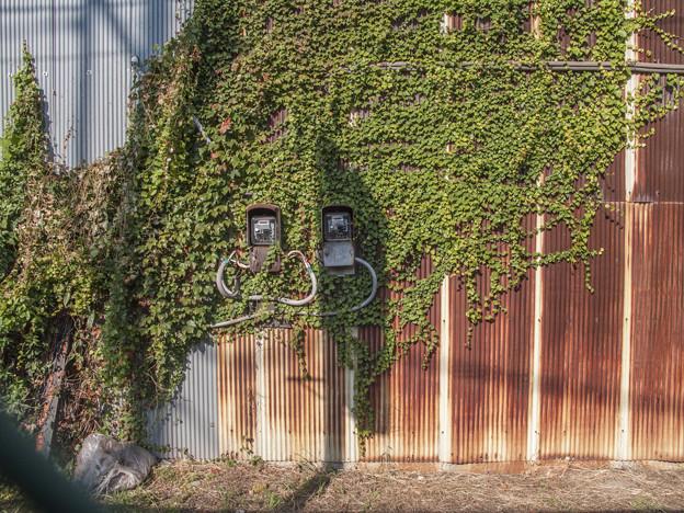 Photos: 惹かれる壁