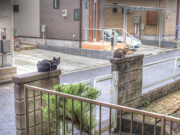 きょうのシーサー(神奈川県最北部地方版)