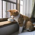 Photos: 一人酒5