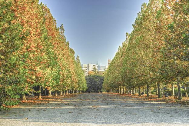 写真: 紅葉の行列