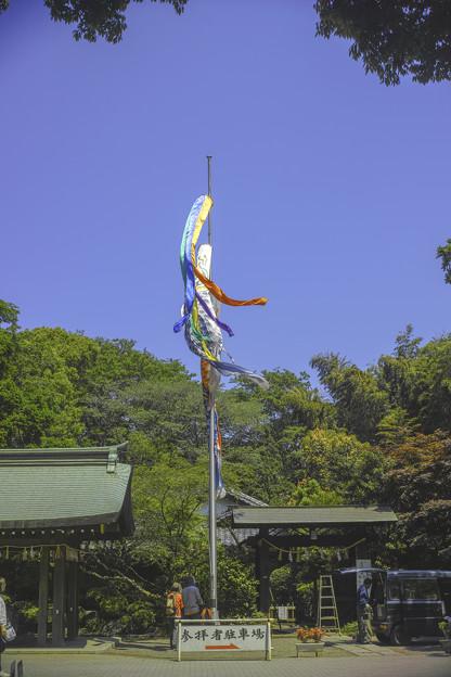 写真: 東京は杉並区大宮八幡宮の鯉幟