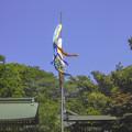 東京は杉並区大宮八幡宮の鯉幟