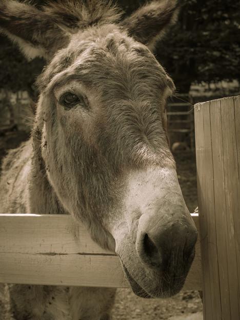 Mr.Donkey