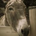 写真: Mr.Donkey