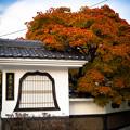 Autumn Leaves in 飛騨高山
