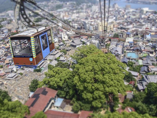 写真: こんもり巨木を上空から