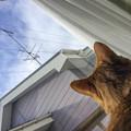 アンテナの上の鳥を狙って奇妙な鳴き声を立てていました