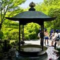 Photos: 鎌倉長谷寺11「すっかり新緑だね(^^♪」