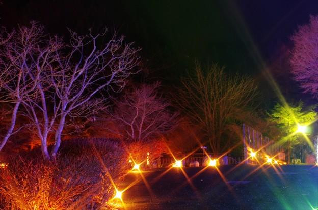 2013山中湖アートイルミネーション ファンタジウム番外07
