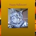 Photos: Halloween2-sample