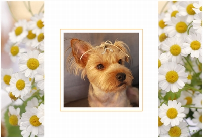 Photos: spring-chamomile-sample