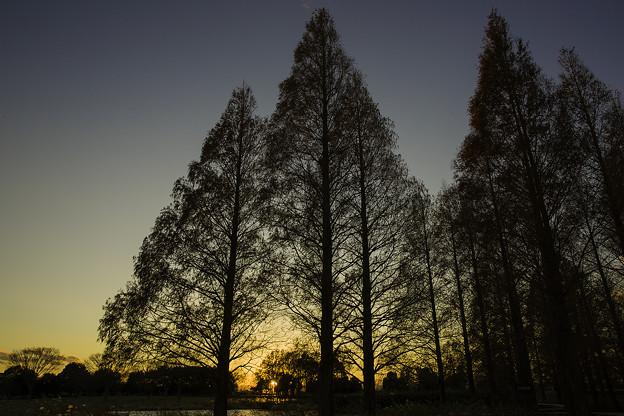 Photos: 夕日を見送って