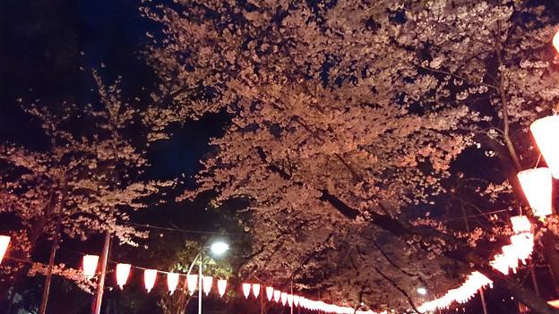 上野夜桜 -Xperia Z Ultra-