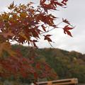 ちいさい秋、見つけた。(近鉄吉野線:奈良県)