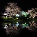 Photos: 飯給駅夜桜