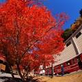 Photos: 2012年 11月20日 大井川鉄道井川線 アプトいちしろ駅の紅葉